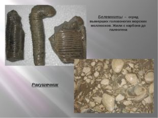 Белемниты – отряд вымерших головоногих морских моллюсков. Жили с карбона до п