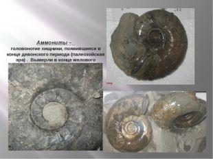 Аммониты – головоногие хищники, появившиеся в конце девонского периода (палео