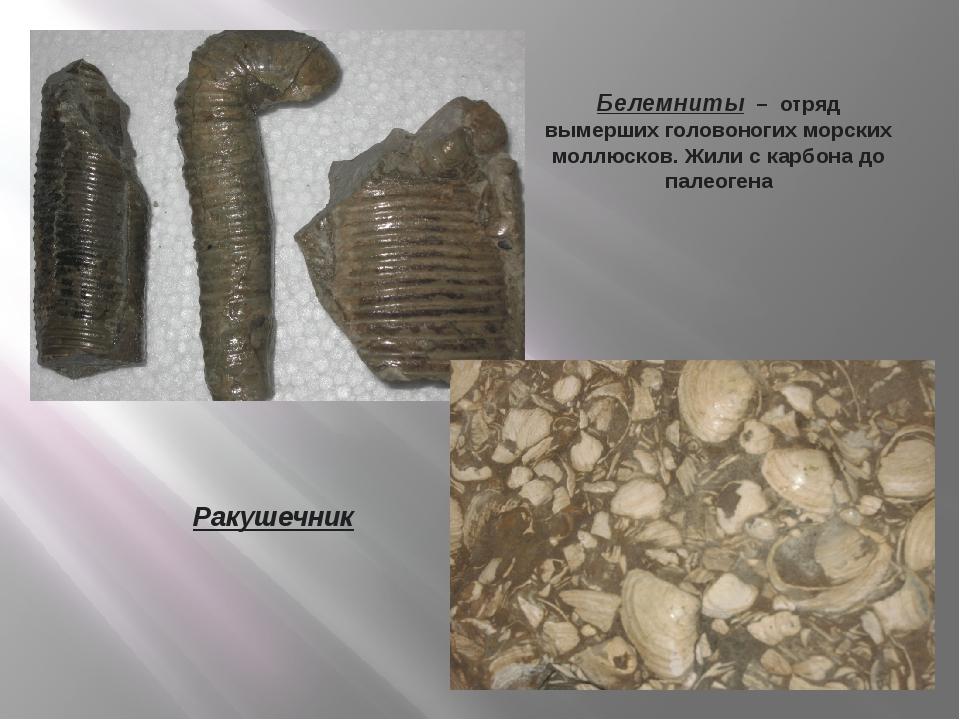 Белемниты – отряд вымерших головоногих морских моллюсков. Жили с карбона до п...