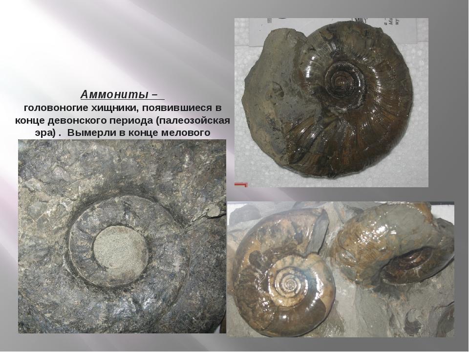 Аммониты – головоногие хищники, появившиеся в конце девонского периода (палео...
