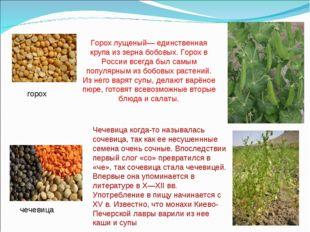 горох чечевица Горох лущеный— единственная крупа из зерна бобовых. Горох в Ро
