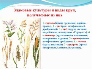 1- гречиха (крупа гречневая: ядрица, продел), 2 – рис (рис: шлифованный, дроб