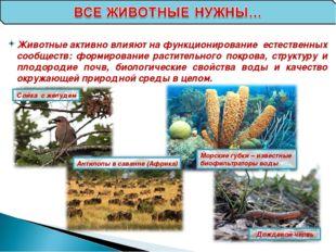Сойка с желудем Антилопы в саванне (Африка) Морские губки – известные биофиль