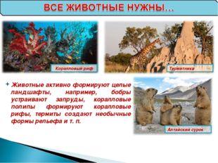 Коралловый риф Термитники Алтайский сурок