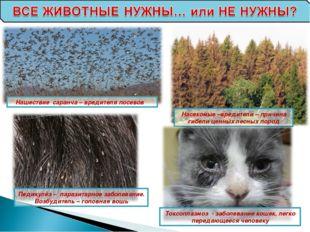 Нашествие саранча – вредителя посевов Насекомые –вредители – причина гибели ц