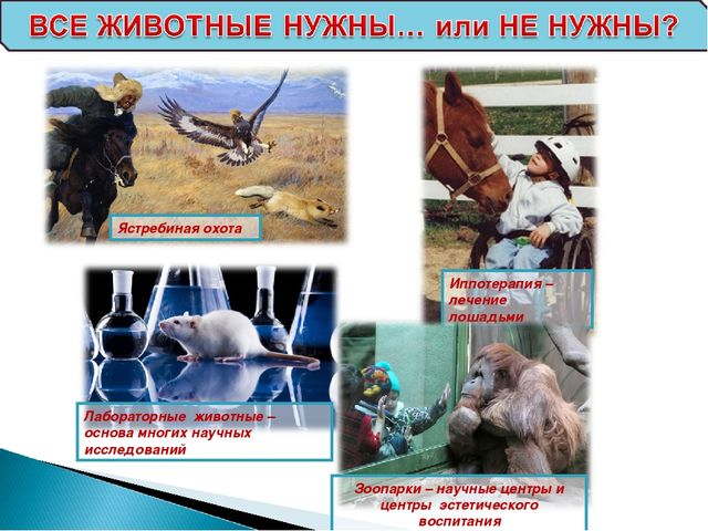 Иппотерапия – лечение лошадьми Ястребиная охота Лабораторные животные – основ...