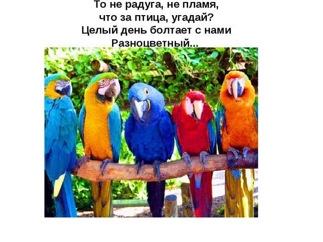 То не радуга, не пламя, что за птица, угадай? Целый день болтает с нами Разно...