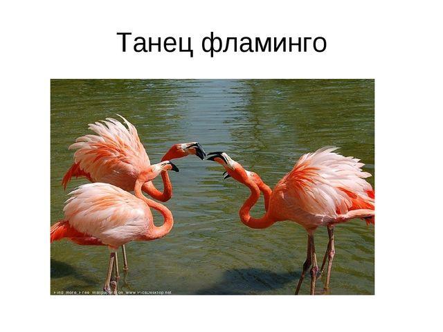 Танец фламинго