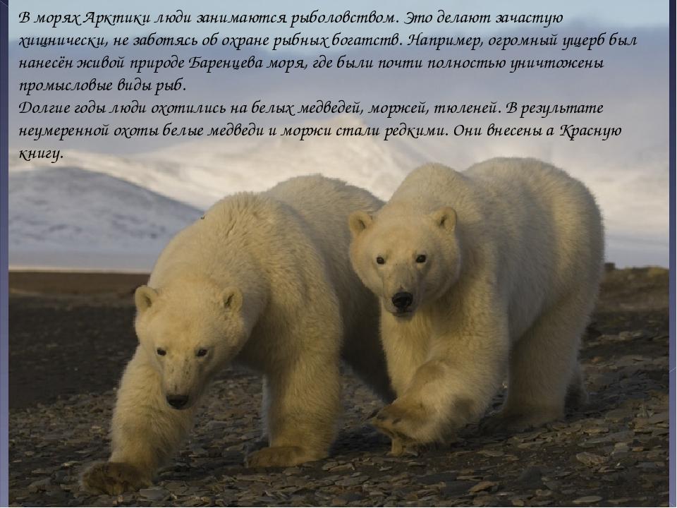 В морях Арктики люди занимаются рыболовством. Это делают зачастую хищнически,...