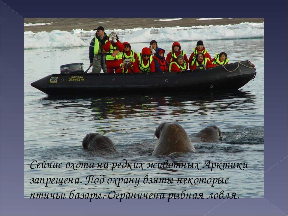 Сейчас охота на редких животных Арктики запрещена. Под охрану взяты некоторые...