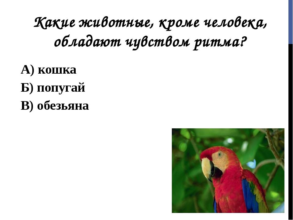 Какие животные, кроме человека, обладают чувством ритма? А) кошка Б) попугай...