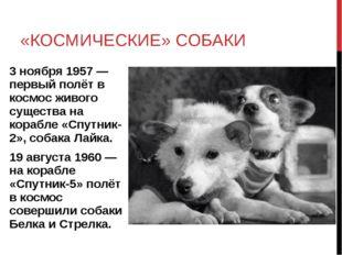 «КОСМИЧЕСКИЕ» СОБАКИ 3 ноября 1957 — первый полёт в космос живого существа на