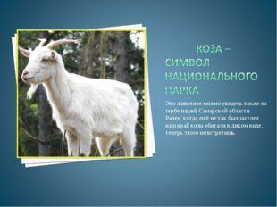 Это животное можно увидеть также на гербе нашей Самарской области. Ранее, ког