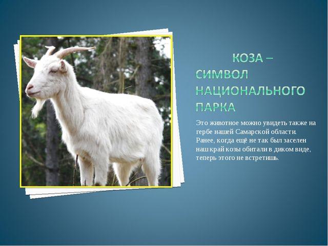Это животное можно увидеть также на гербе нашей Самарской области. Ранее, ког...