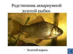 Эта рыба выдерживает частичное пересыхание водоёма и полное промерзание до дн