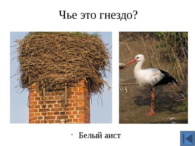 Герои картины Алексея Кондратьевича Саврасова? Грачи Набросок к картине