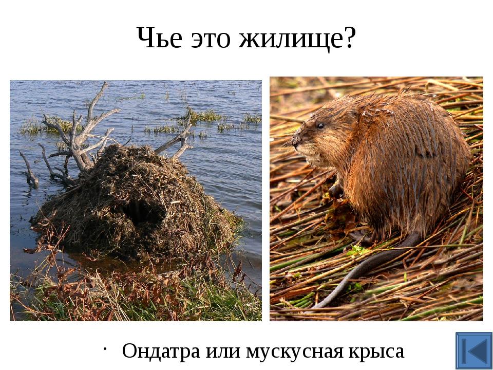 Кто делает такое гнездо? Дятел или Пестрый дятел