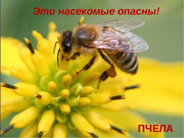 Эти насекомые опасны! ПЧЕЛА