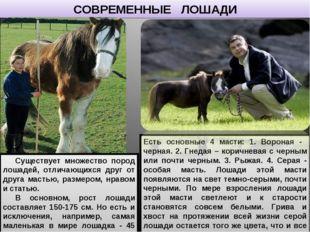 СОВРЕМЕННЫЕ ЛОШАДИ Существует множество пород лошадей, отличающихся друг от д