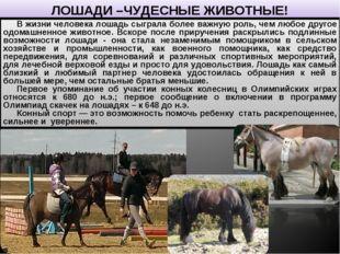 ЛОШАДИ –ЧУДЕСНЫЕ ЖИВОТНЫЕ! В жизни человека лошадь сыграла более важную роль,
