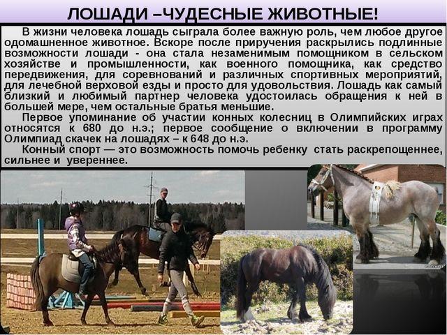ЛОШАДИ –ЧУДЕСНЫЕ ЖИВОТНЫЕ! В жизни человека лошадь сыграла более важную роль,...