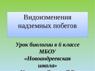 Видоизменения надземных побегов Урок биологии в 6 классе МБОУ «Новоандреевска