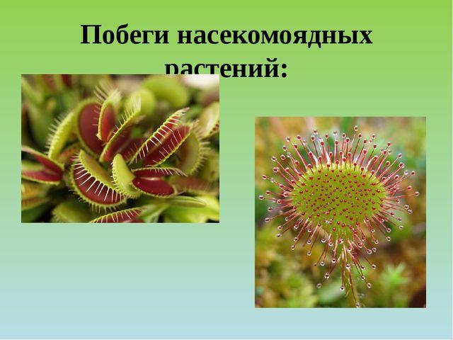 Побеги насекомоядных растений: