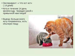 Эксперимент: « Что ест кот» ( 14 дней) Коту в течение 14 день меняли еду. Чер