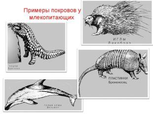 Примеры покровов у млекопитающих