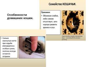 Особенности домашних кошек.