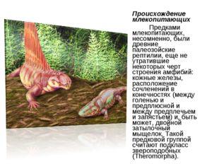 Происхождение млекопитающих Предками млекопитающих, несомненно, были древние