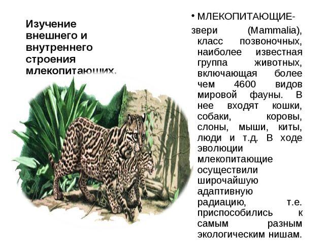 Изучение внешнего и внутреннего строения млекопитающих. МЛЕКОПИТАЮЩИЕ- звери...