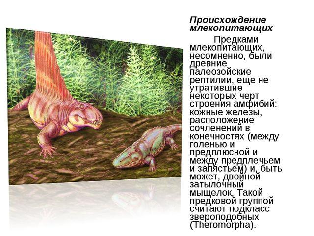 Происхождение млекопитающих Предками млекопитающих, несомненно, были древние...