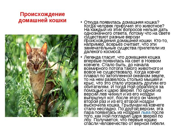 Происхождение домашней кошки Откуда появилась домашняя кошка? Когда человек п...