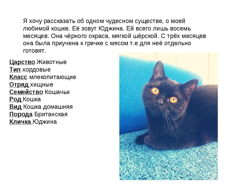 Я хочу рассказать об одном чудесном существе, о моей любимой кошке. Её зовут...