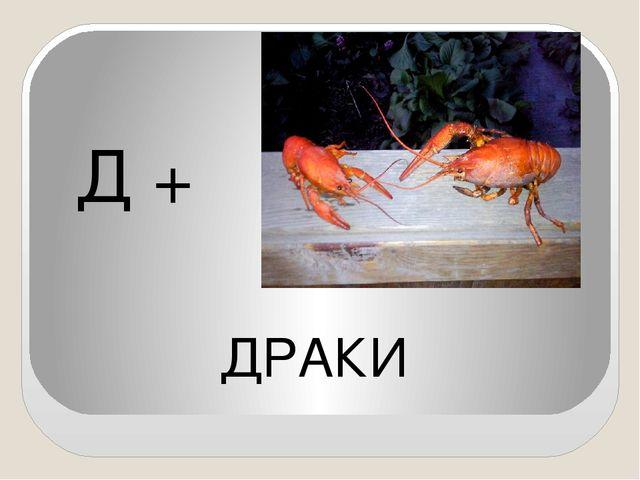 Д + ДРАКИ