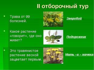 II отборочный тур Трава от 99 болезней. Какое растение «говорит», где оно жив
