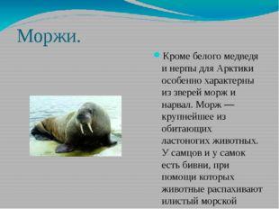 Моржи. Кроме белого медведя и нерпы для Арктики особенно характерны из зверей