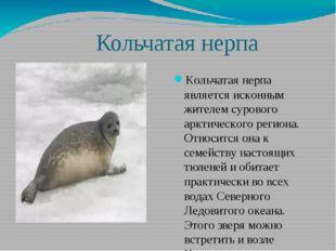 Кольчатая нерпа Кольчатая нерпа является исконным жителем сурового арктическ