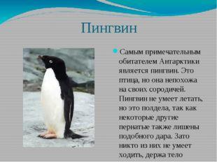 Пингвин Самым примечательным обитателем Антарктики является пингвин. Это пти