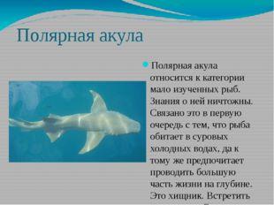 Полярная акула Полярная акула относится к категории мало изученных рыб. Знани