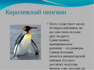 Королевский пингвин Всего существует около 20 видов пингвинов, но все они оче
