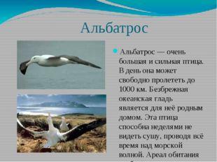 Альбатрос Альбатрос — очень большая и сильная птица. В день она может свобод