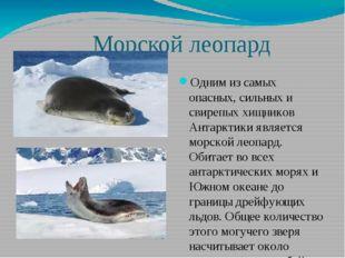 Морской леопард Одним из самых опасных, сильных и свирепых хищников Антаркти