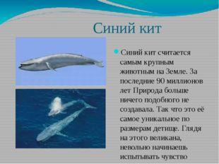Синий кит Синий кит считается самым крупным животным на Земле. За последние