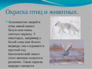 Окраска птиц и животных. Большинство зверей и птиц зимой имеют белую или очен