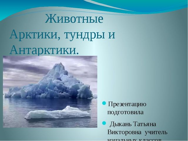 Животные Арктики, тундры и Антарктики. Презентацию подготовила Дыкань Татьян...
