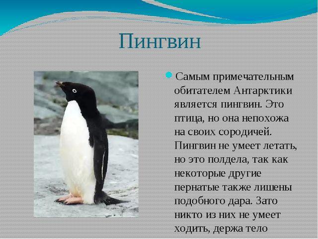 Пингвин Самым примечательным обитателем Антарктики является пингвин. Это пти...