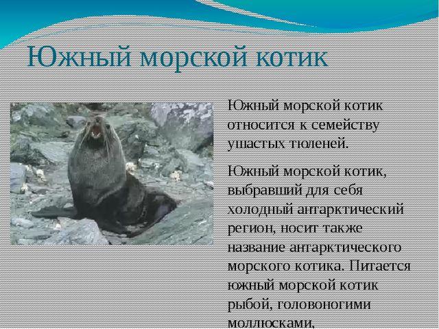 Южный морской котик Южный морской котик относится к семейству ушастых тюленей...