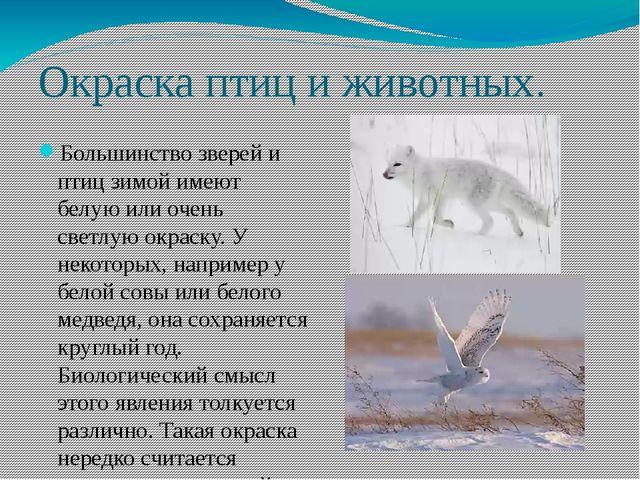 Окраска птиц и животных. Большинство зверей и птиц зимой имеют белую или очен...